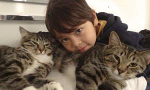 Benji Sydneycatsitters
